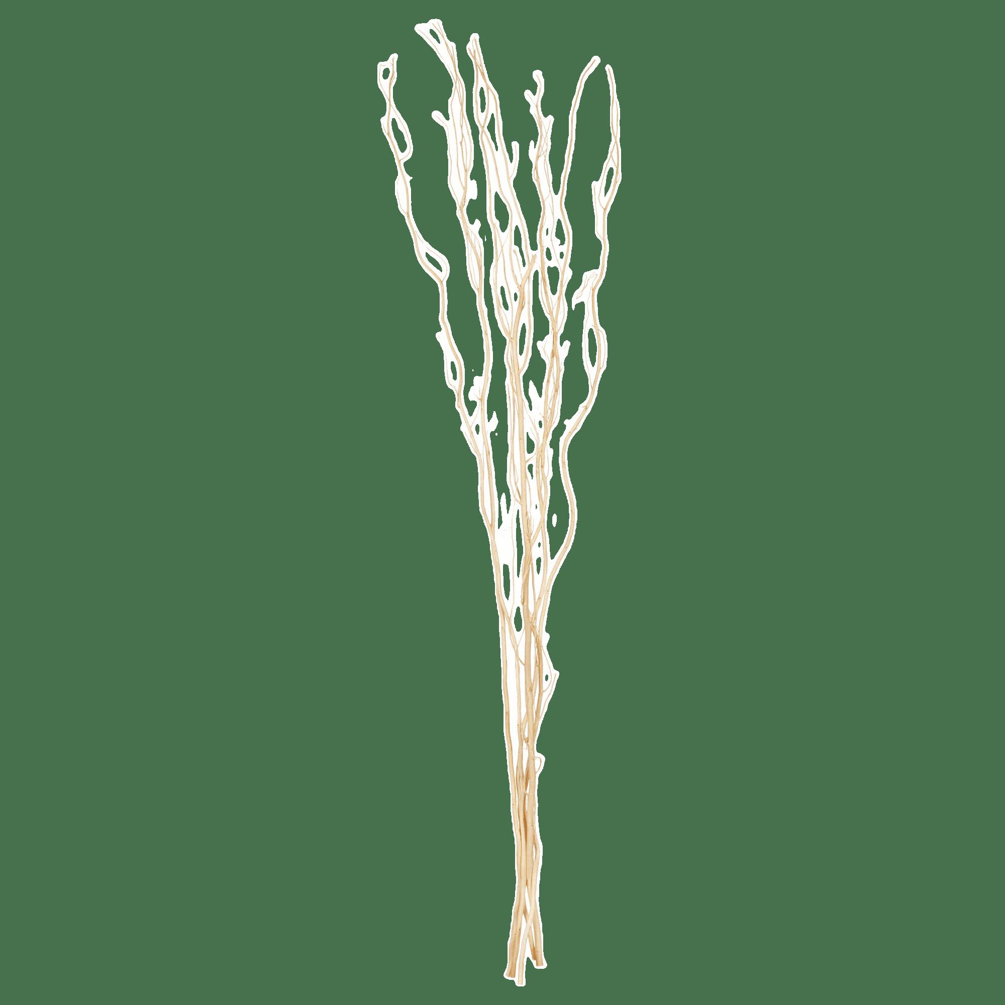 Branches de Saules décoratives