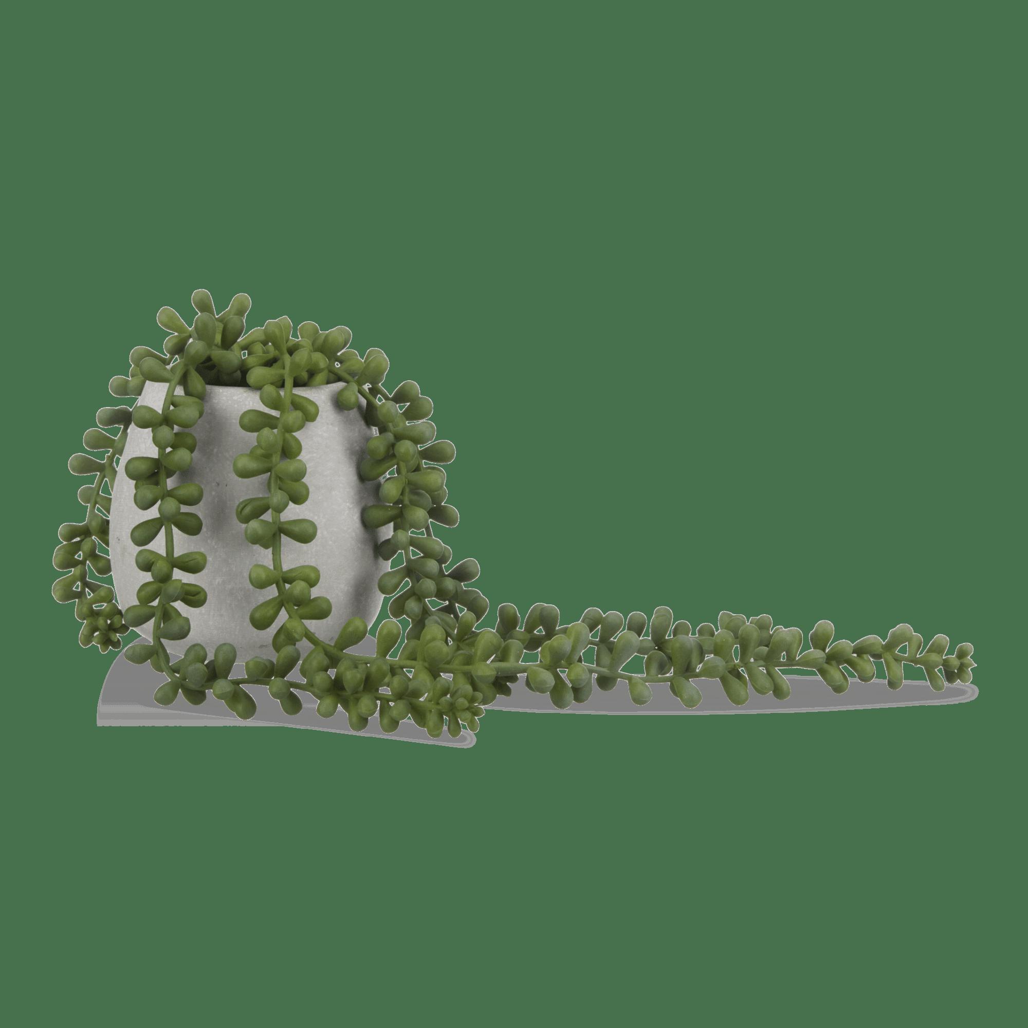 Plante retombante en pot de céramique