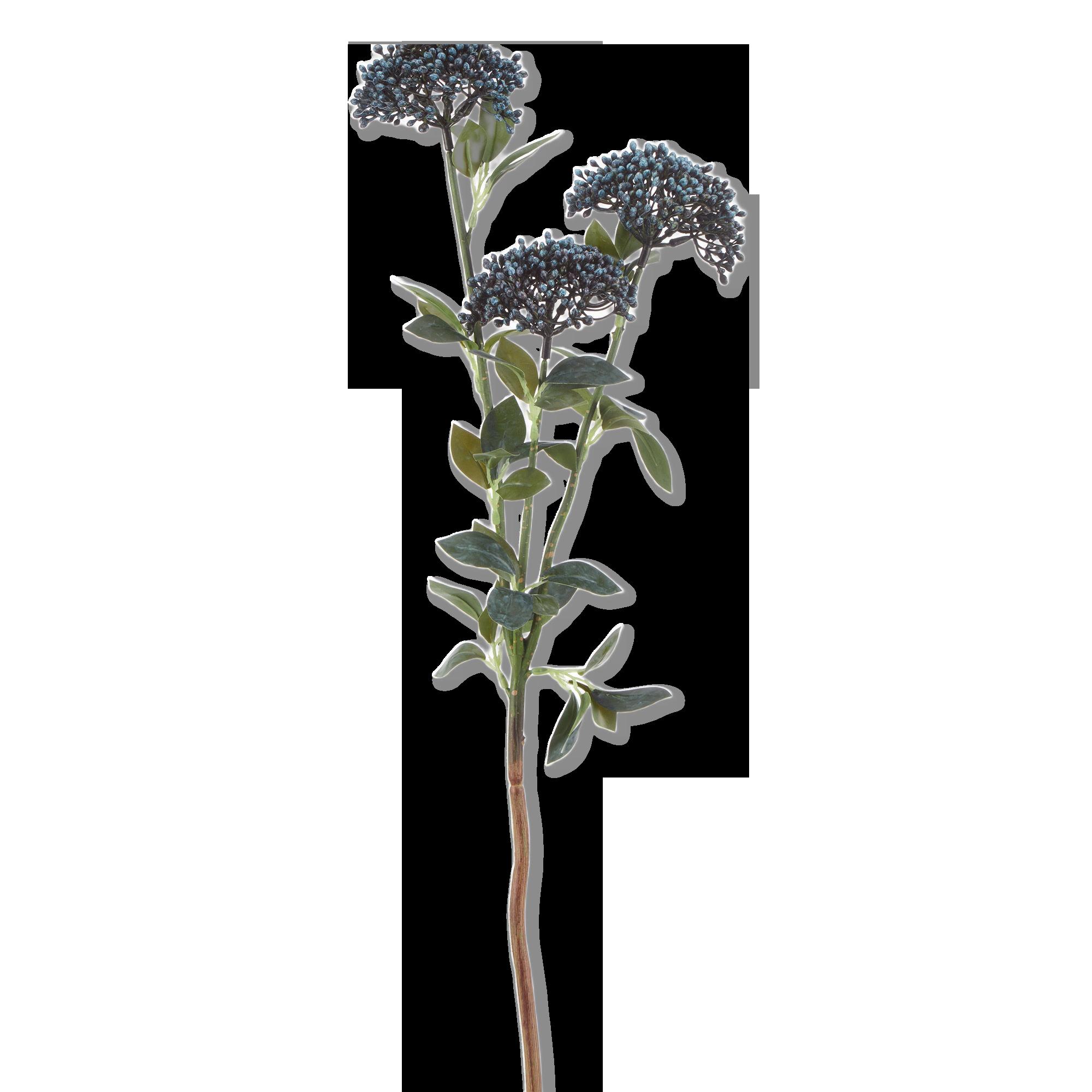Tige d'hortensia bleue