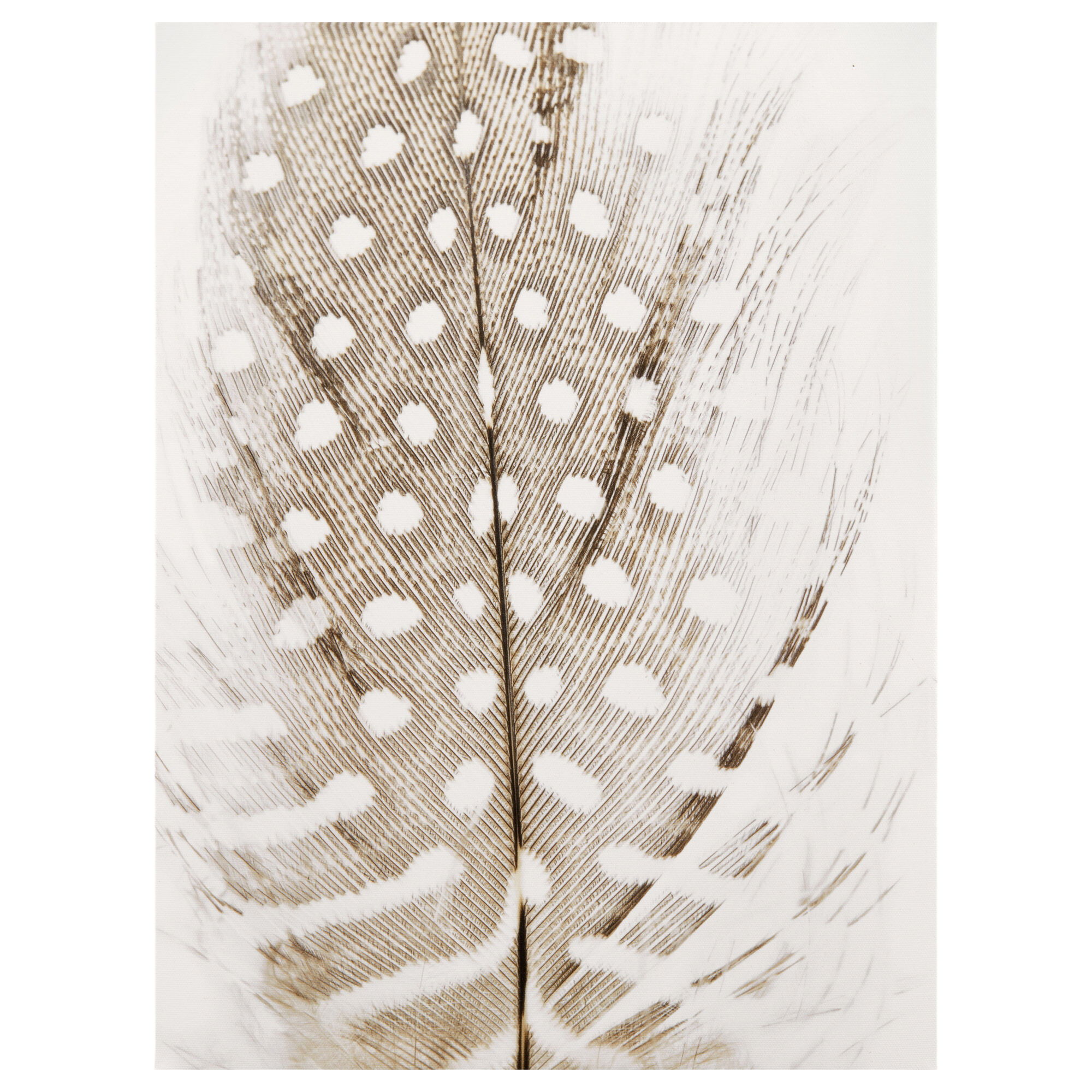 Spotted Feather Printed Canvas