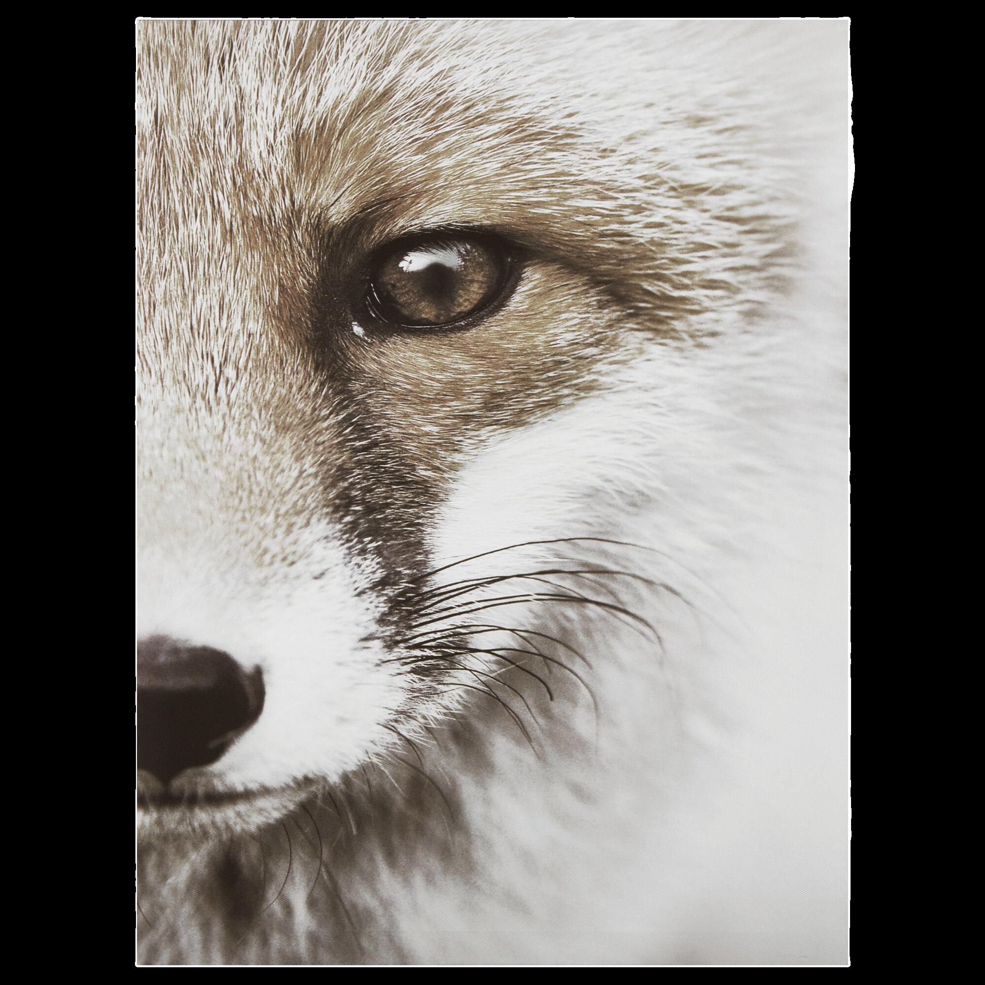 Fox Closeup Printed Canvas